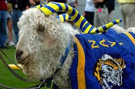 Image result for navy football mascot